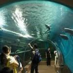 須磨海浜水族園の料金は!? 割引クーポンはあるの?
