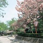 京都駅から、円山公園へのアクセス おすすめの行き方を紹介します