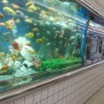 大阪駅や梅田駅から、かわいい水族館へのアクセス(行き方) おすすめの行き方を紹介します