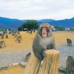 嵐山モンキーパークいわたやま周辺の宿泊施設(ホテル)について アクセスに便利な、おすすめのホテルを紹介します