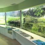 姫路市立水族館に行くなら、できる限り安く!! 割引きクーポンはあるのか? チケットを安く手に入れる方法