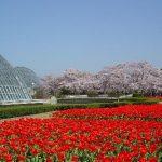 京都府立植物園周辺の宿泊施設(ホテル)について アクセスに便利な、おすすめのホテルを紹介します
