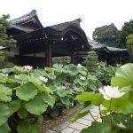 京都駅から、法金剛院へのアクセス(行き方) おすすめの行き方を紹介します