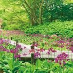 神戸駅から、六甲高山植物園へのアクセス(行き方) おすすめの行き方を紹介します