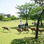 法隆寺から、奈良公園へのアクセス おすすめの行き方を紹介します