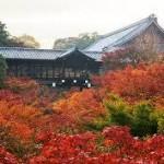 城南宮から、東福寺へのアクセス おすすめの行き方を紹介します