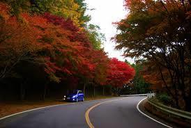 比叡山ドライブウェイ1