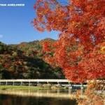 京都駅から、嵐山へのアクセス 京都へ旅をするならば、桜や紅葉の名所!!
