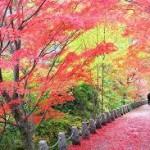 新大阪駅や奈良駅から、吉野山へのアクセス(行き方) おすすめの行き方を紹介します