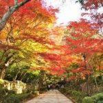 京都駅から、金剛輪寺へのアクセス おすすめの行き方を紹介します