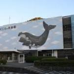 和歌山駅から、くじらの博物館へのアクセス おすすめの行き方を紹介します