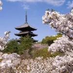 京都駅から、仁和寺へのアクセス おすすめの行き方を紹介します