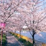毛馬桜之宮公園の駐車場について 確実に近くに駐車するおすすめの方法を紹介します