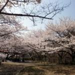 大阪駅から永楽ダム(永楽ゆめの森公園)へのアクセス(行き方) おすすめの行き方を紹介します