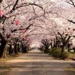 新大阪駅(新幹線ホーム)や大阪駅から造幣局 桜の通り抜けへのアクセス(行き方) おすすめの行き方を紹介します