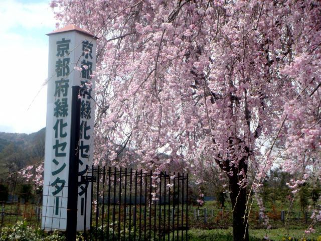 京都府緑化センター1