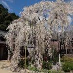 奈良駅から、大野寺へのアクセス おすすめの行き方を紹介します