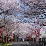 大阪駅や奈良駅から、大中公園へのアクセス(行き方) おすすめの行き方を紹介します