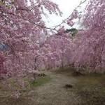 大阪駅から、奈良県吉野の高見の郷へのアクセス おすすめの行き方を紹介します