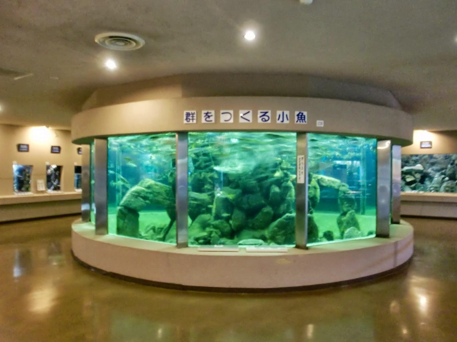 京大白浜水族館1