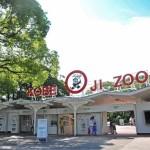 神戸市立王子動物園へ行くなら、できる限り安く!! 割引きクーポンはあるのか? チケットを安く手に入れる方法