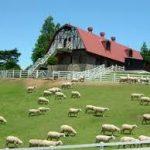 姫路駅から、神戸市立六甲山牧場へのアクセス おすすめの行き方を紹介します