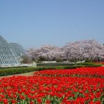 京都駅から、京都府立植物園へのアクセス(行き方) おすすめの行き方を紹介します