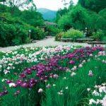 奈良駅から、滝谷花しょうぶ園へのアクセス おすすめの行き方を紹介します