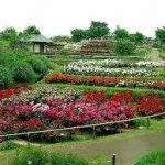 難波駅から、浜寺公園へのアクセス おすすめの行き方を紹介します