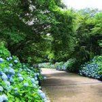 大阪駅から、神戸市立森林植物園へのアクセス おすすめの行き方を紹介します