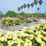 梅田駅から、長居植物園へのアクセス おすすめの行き方を紹介します