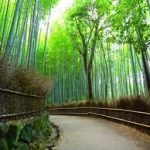 天龍寺から、竹林の道へのアクセス おすすめの行き方を紹介します