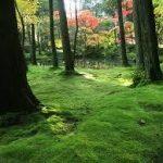 桂離宮から、西芳寺(苔寺)へのアクセス おすすめの行き方を紹介します