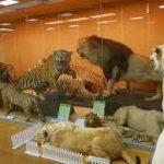 難波駅から、きしわだ自然資料館へのアクセス おすすめの行き方を紹介します