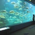 和歌山駅から、和歌山県立自然博物館へのアクセス おすすめの行き方を紹介します