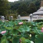 大阪駅から、久安寺へのアクセス おすすめの行き方を紹介します
