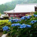 奈良駅から、矢田寺へのアクセス おすすめの行き方を紹介します