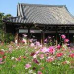 奈良駅から、般若寺へのアクセス おすすめの行き方を紹介します