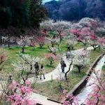 奈良駅から、月ヶ瀬梅林へのアクセス おすすめの行き方を紹介します