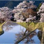 四日市駅から、三多気の桜へのアクセス おすすめの行き方を紹介します