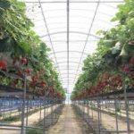 四日市駅から、玉城ふれあい農園へのアクセス おすすめの行き方を紹介します