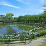 大阪駅から、白鷺公園 ハナショウブ園へのアクセス おすすめの行き方を紹介します